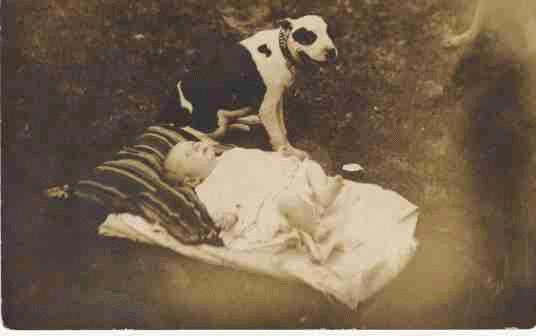 old-pit-bull-and-baby-picture