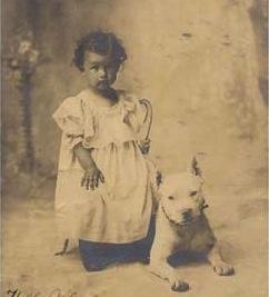 pit-bull-pitbull-dog1