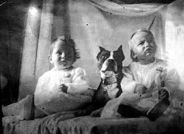 vintagebulldogs22