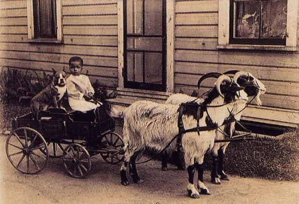 Old photo of Pitbull babysitter with child in goat-drawn cart