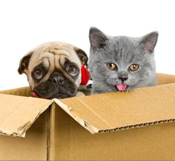 http://www.adoptapet.com/blog/uploads/2011/12/moving-cat-dog.jpg
