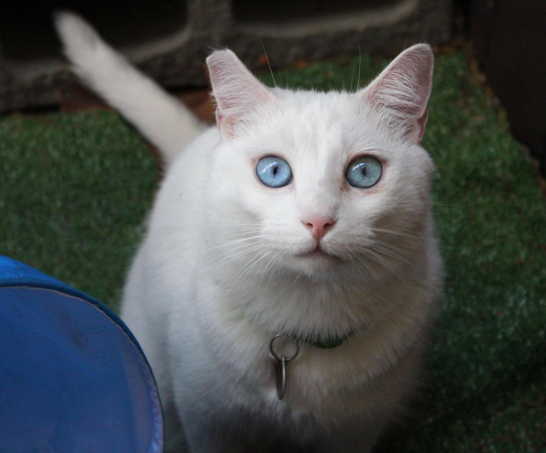 Solace-blue-eyes-tube