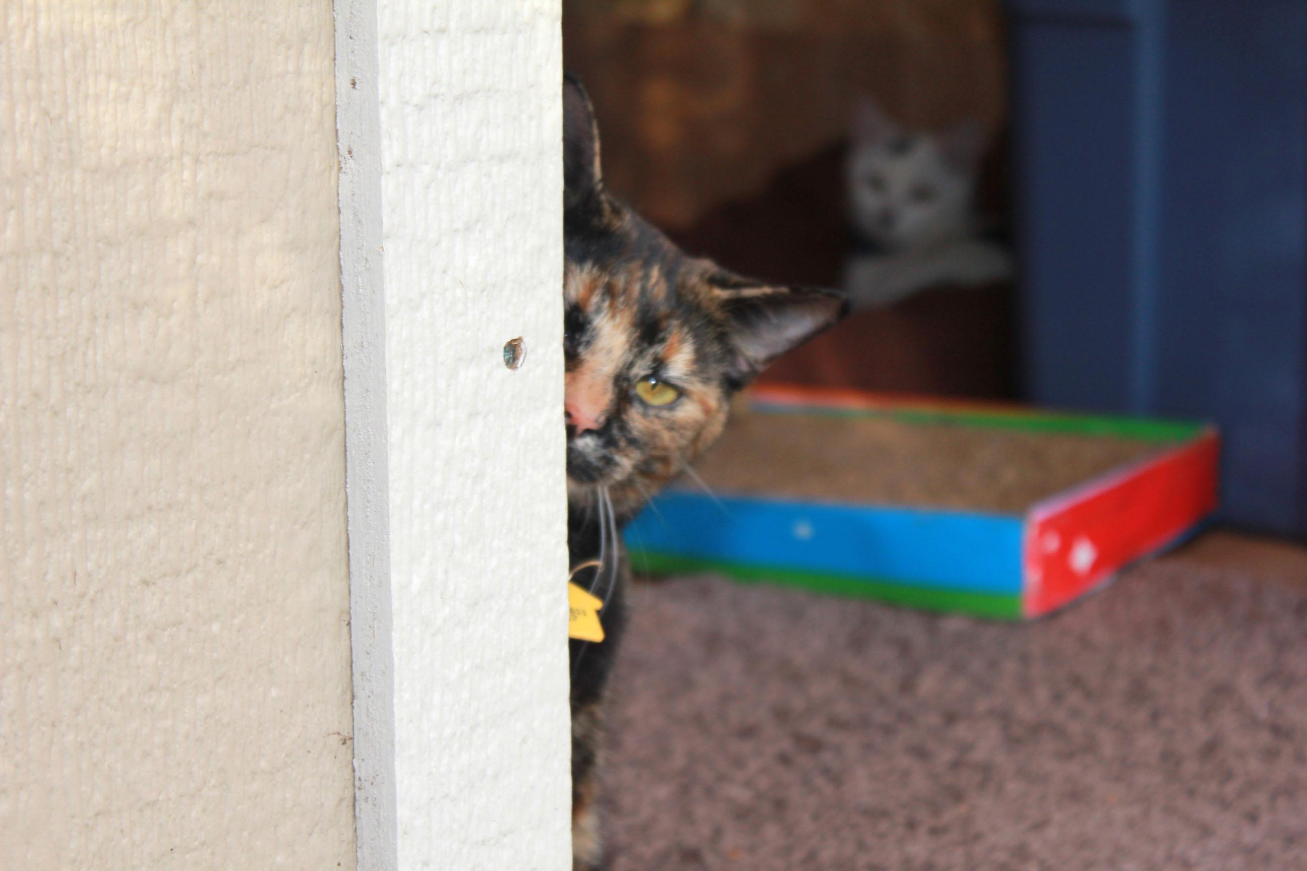 Sophia spying