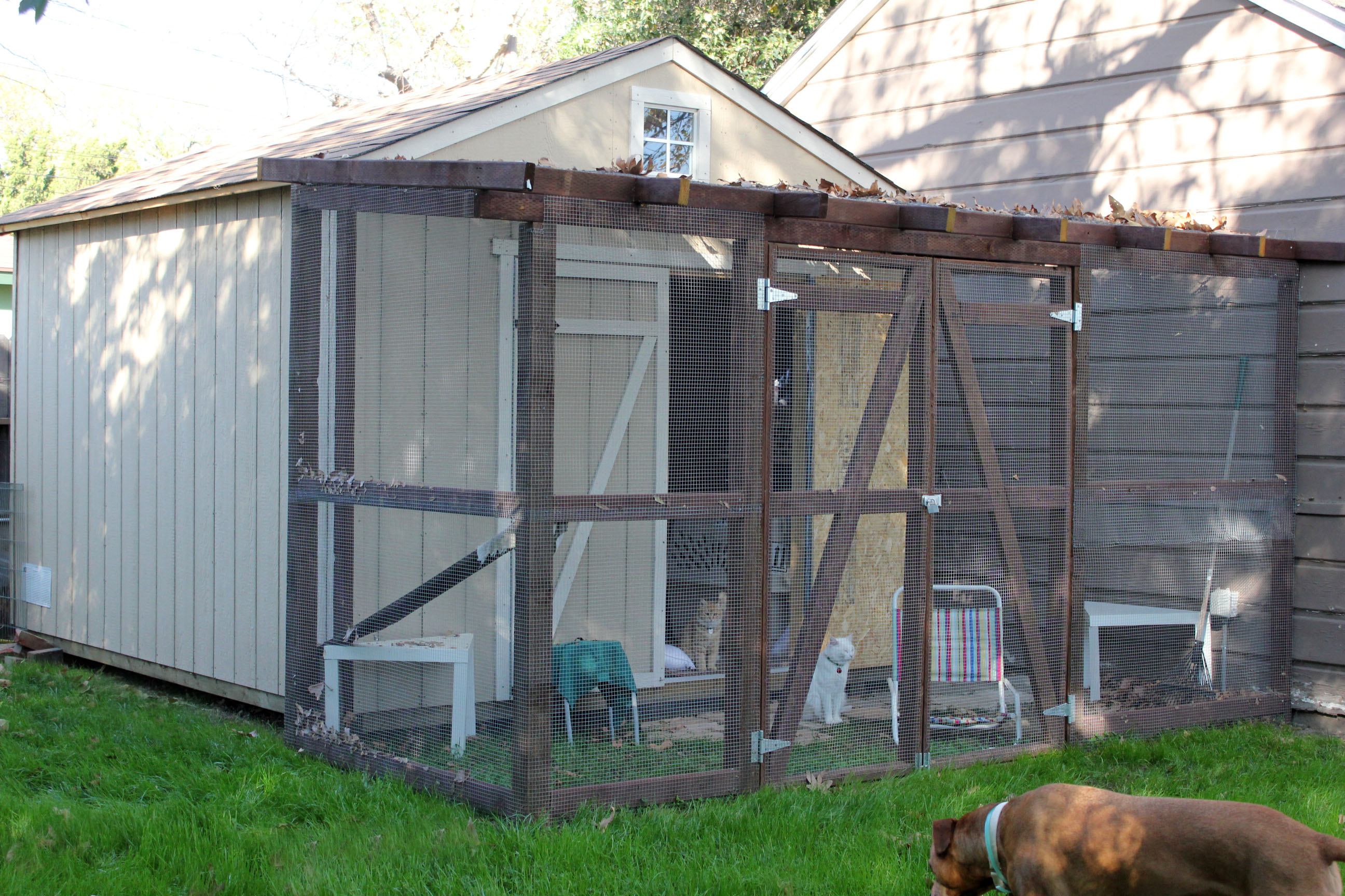 cathouse-catio-outside
