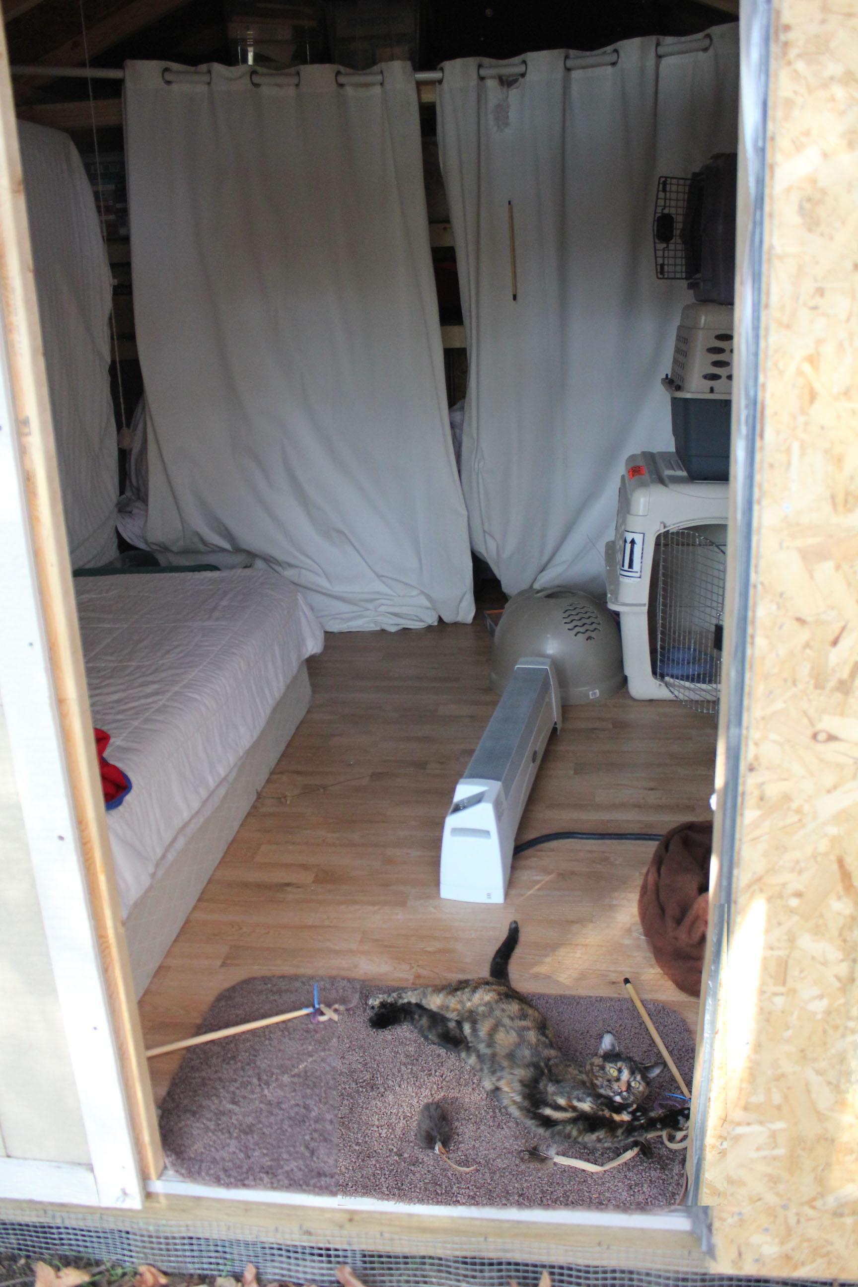 cathouse-interior-rough