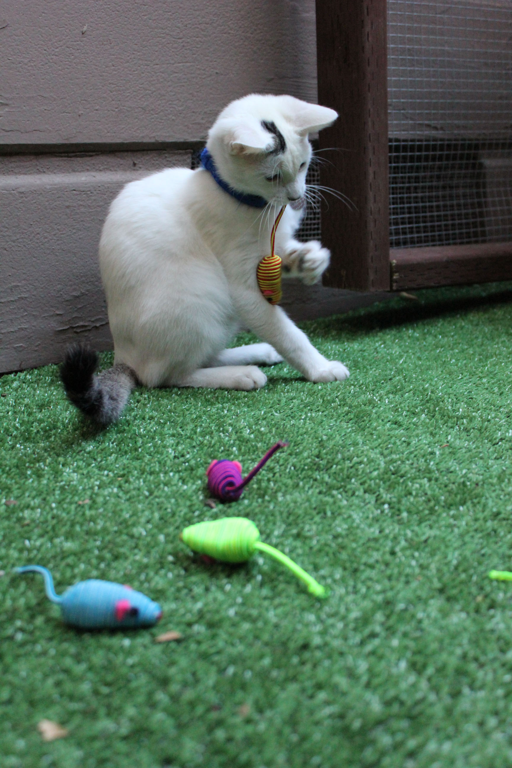 toys on fake grass in catio