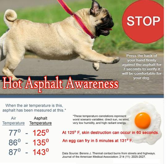 How Hot Is Asphalt For Dogs