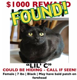 http://www.adoptapet.com/blog/uploads/2012/09/lost-found-cat-poster.jpg