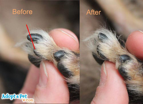 Don T Trim Your Dog S Nail
