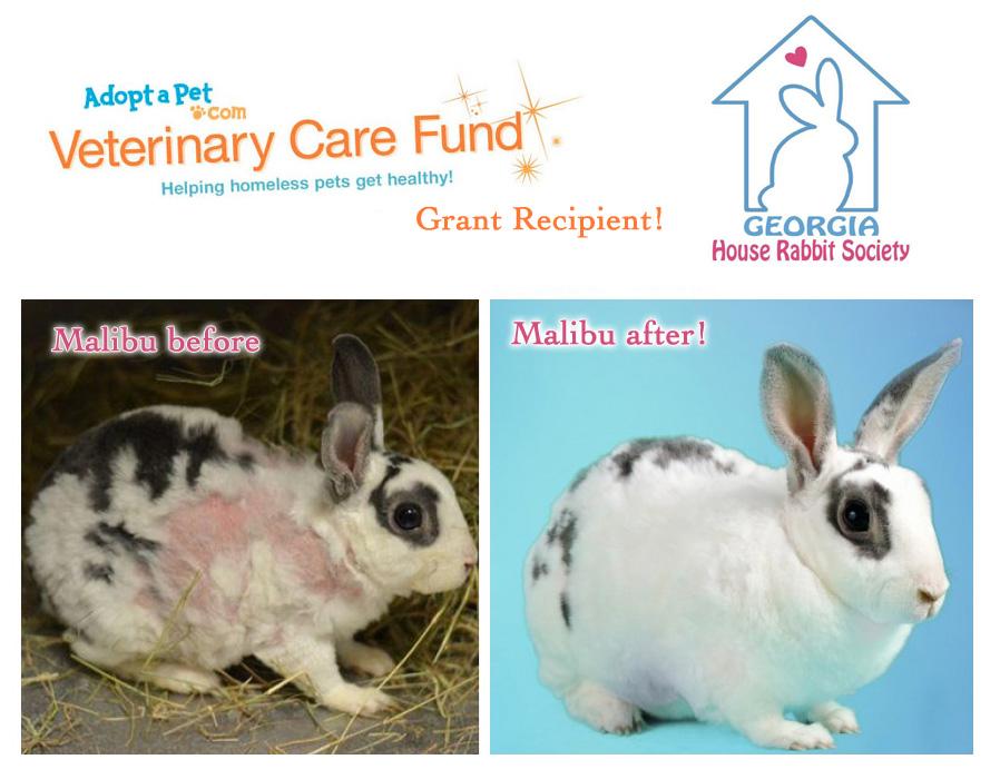 Grant Recipient: Georgia House Rabbit Society » AdoptaPet ...