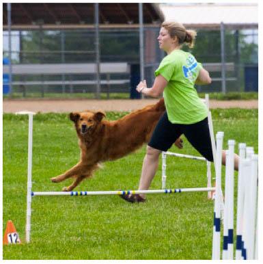 dog-exercise