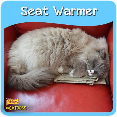 CatJobs-seat-warmer