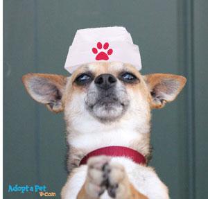 dog-nurse-hat