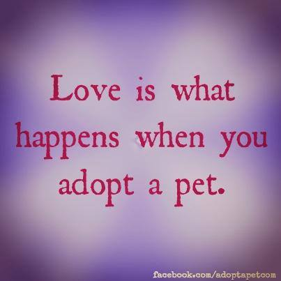 love-is-adopting-a-pet