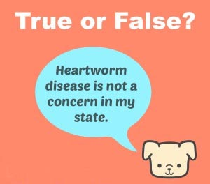 Heartworm-true-or-false