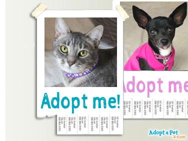 adopt-dog-cat-poster