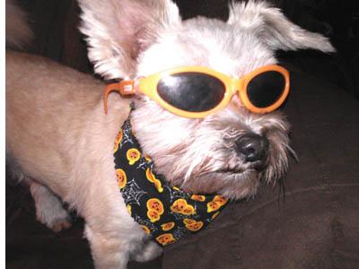 Elvis-dog