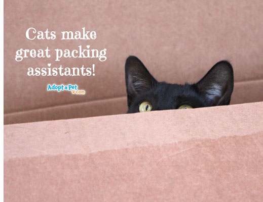 cat-in-box-packing