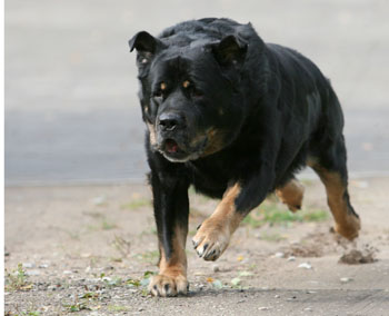 dog-attack