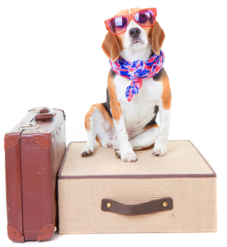travel tips traveling pets