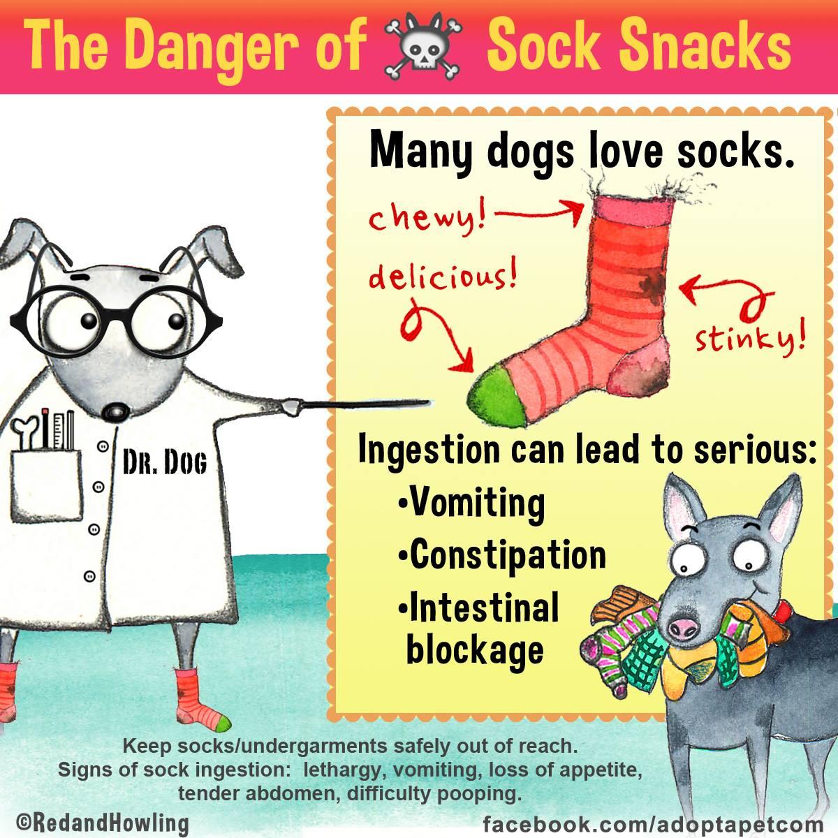 dog-danger-socks