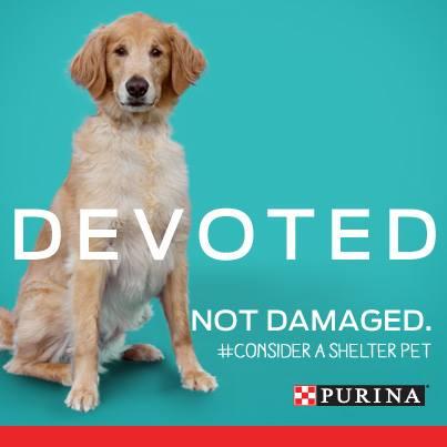 consider-a-shelter-pet