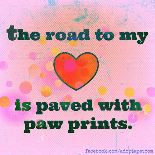 heart-paw-prints
