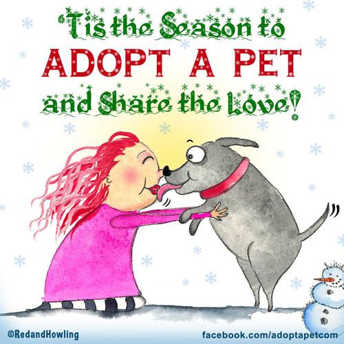 tis-the-season-to-adopt-a-pet