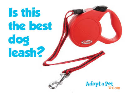 best-flexi-leash