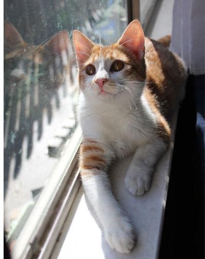 outdoor-cat-to-indoors