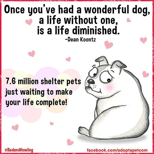 cartoon-wonderful-life-dog