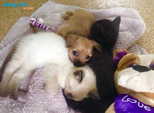 puppy-kitten-snuggle
