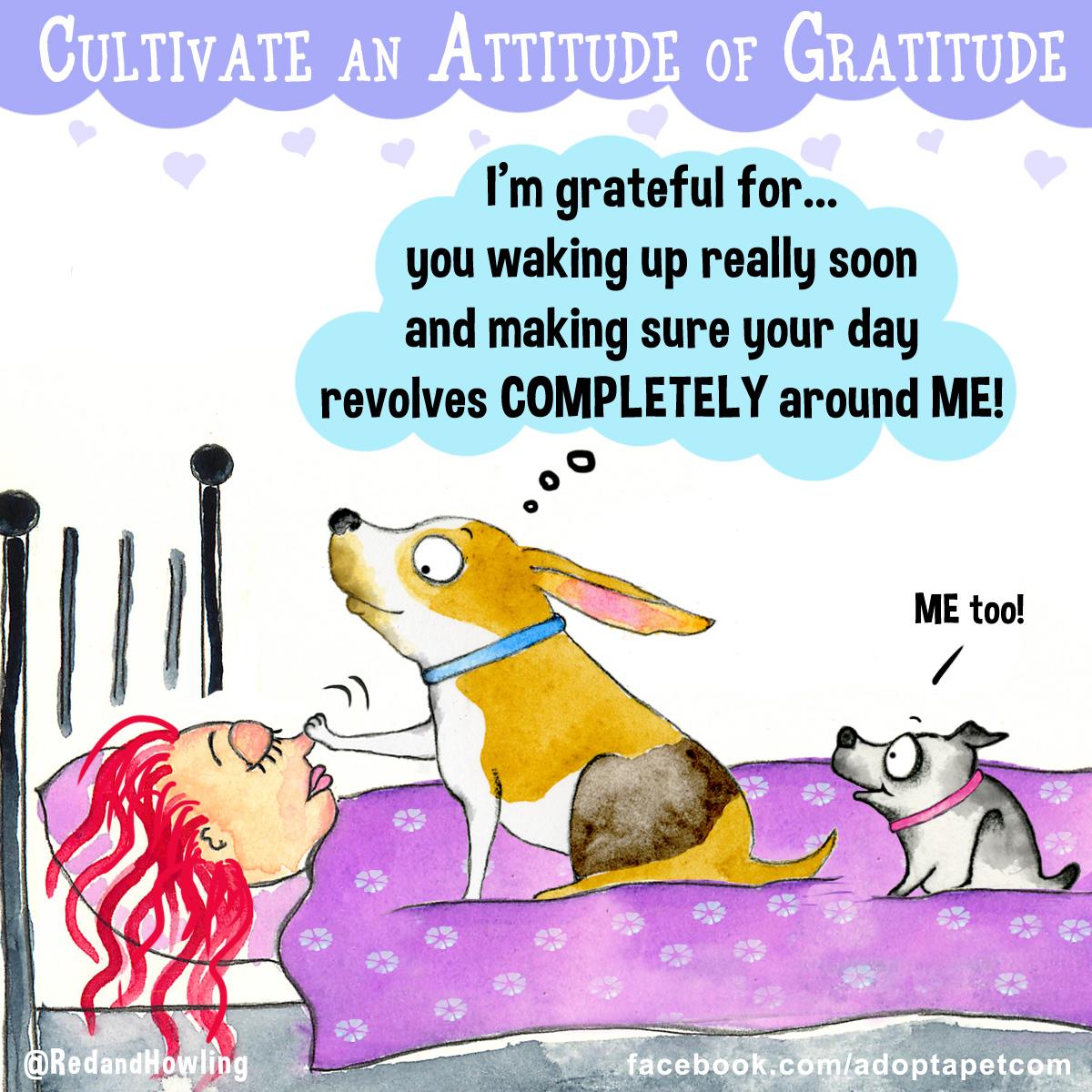 AAPgratitude