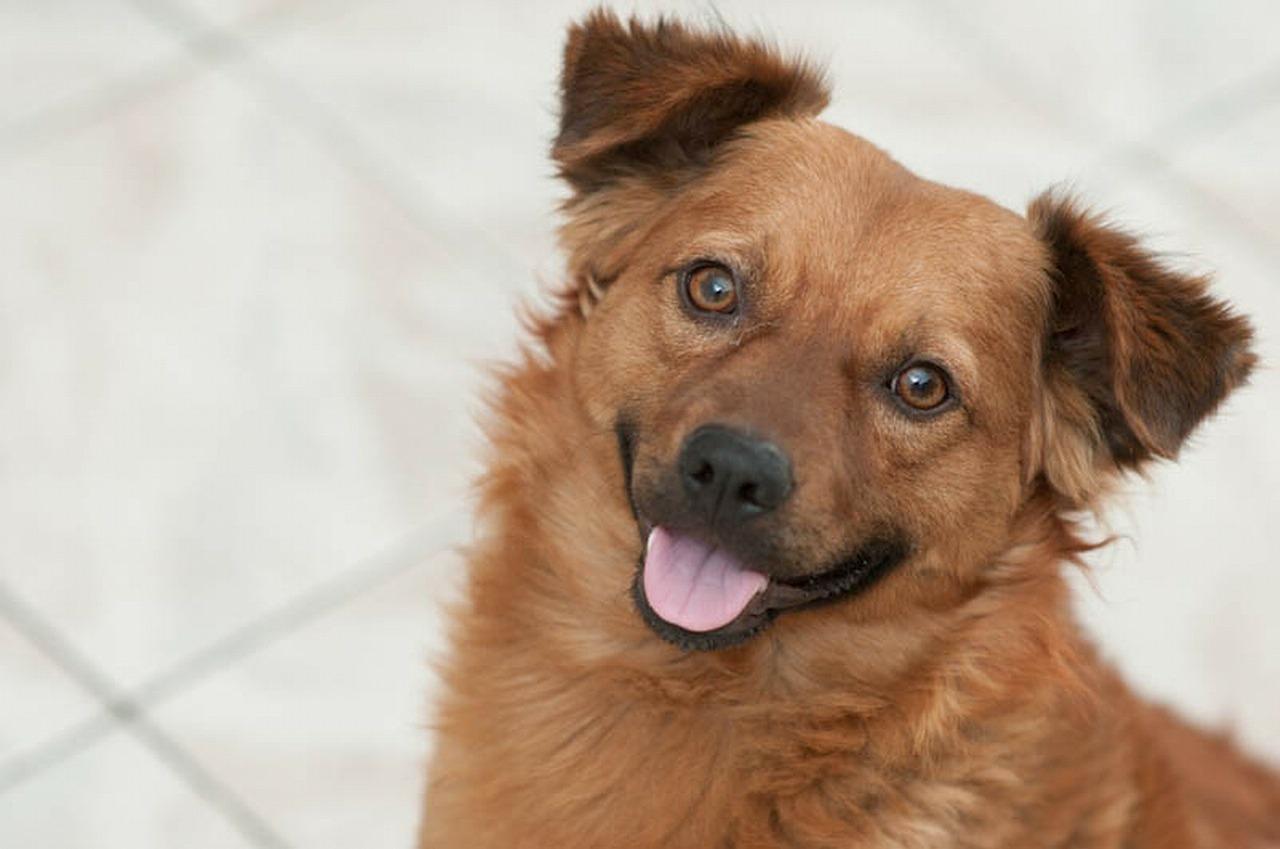 puppy-smile
