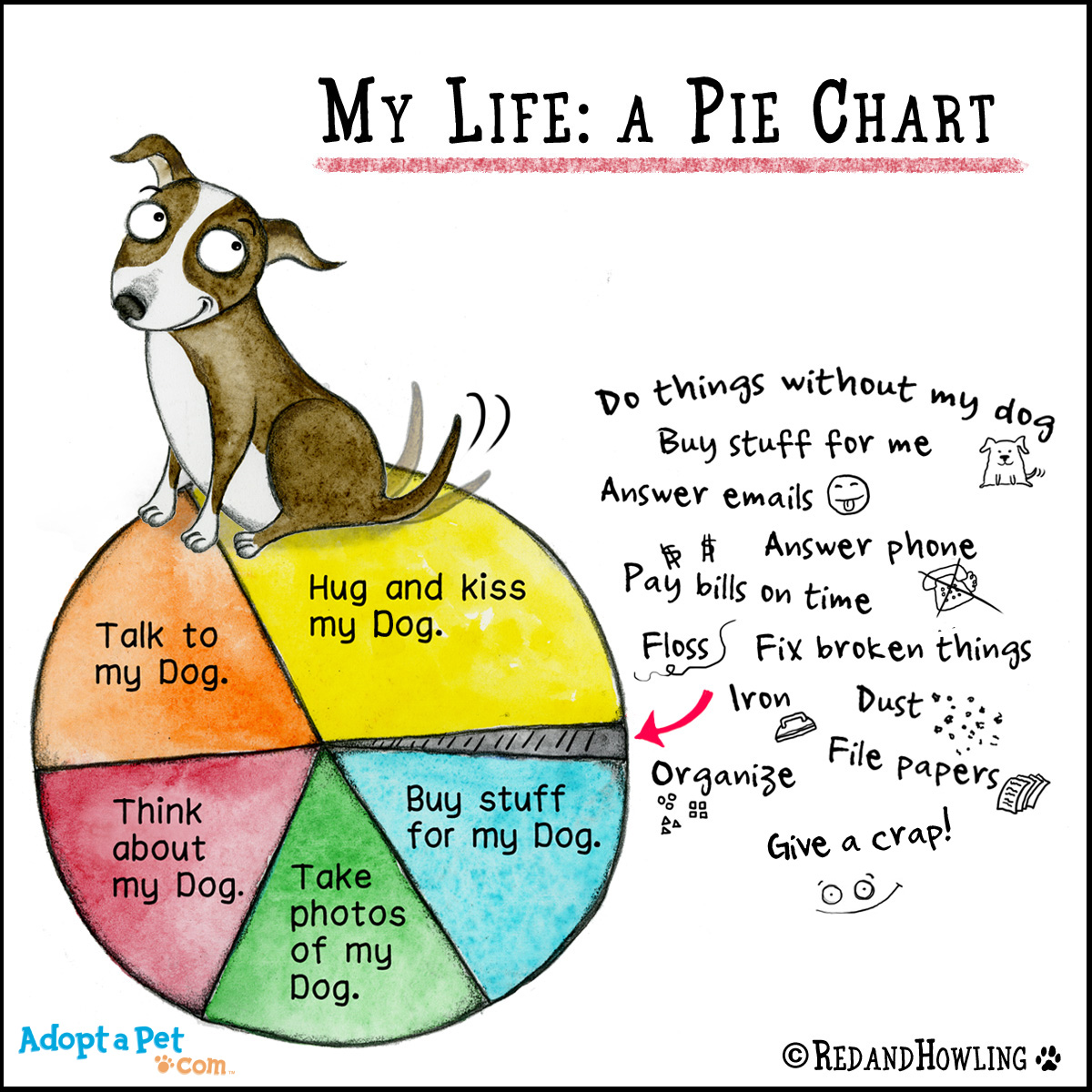 new cartoon pie chart adoptapet   blog