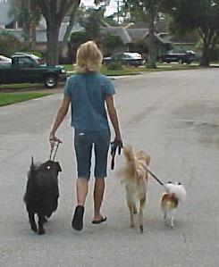 3 dog walk