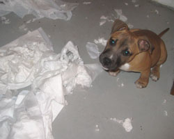 why puppy-proofing is important