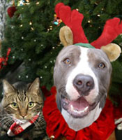 holiday-pit-cat