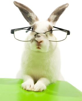 white rabbit wearing glasses