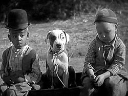 1930 Petey Little Rascals Pitbull