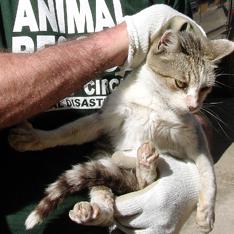 Chili-cat