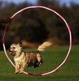 teach-your-dog-to-jump-through-a-hoop