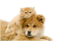 ways-to-help-homeless-pets