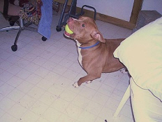 amber-pet-adoption