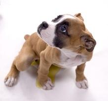 puppy-pee