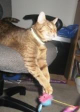 rita-rescue-cat