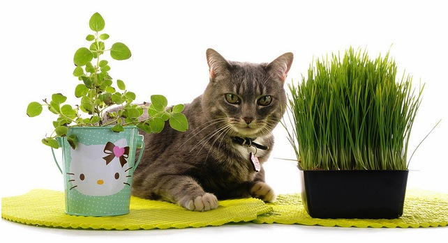 http://www.adoptapet.com/blog/wp-content/uploads/2011/01/cat-grass.jpg