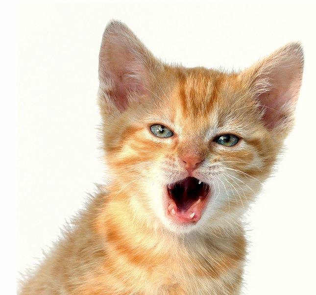 kitten-talk