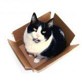 438914_cat_in_a_box