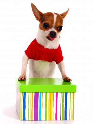 How to give a pet as a gift » AdoptaPet.com Blog